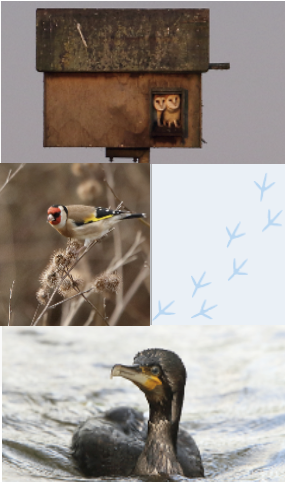 A montage of a bird house, two different birds, and a duck.