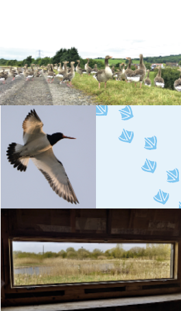 A montage of images include ducks sitting on the side of the reservoir, a duck flying, a daisy and the view from a bird hide.