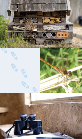 A montage showing a bug hotel, blue flowers, an insect and binoculars in a bird hide.